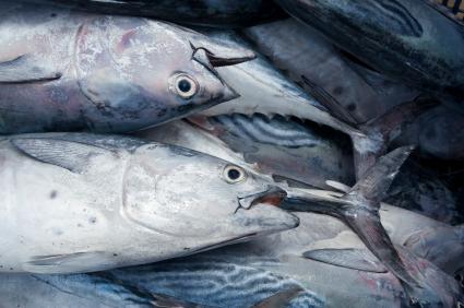 Divieto di pesca del tonno rosso